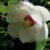 Rośliny jednoliścienne i okrytozalążkowe